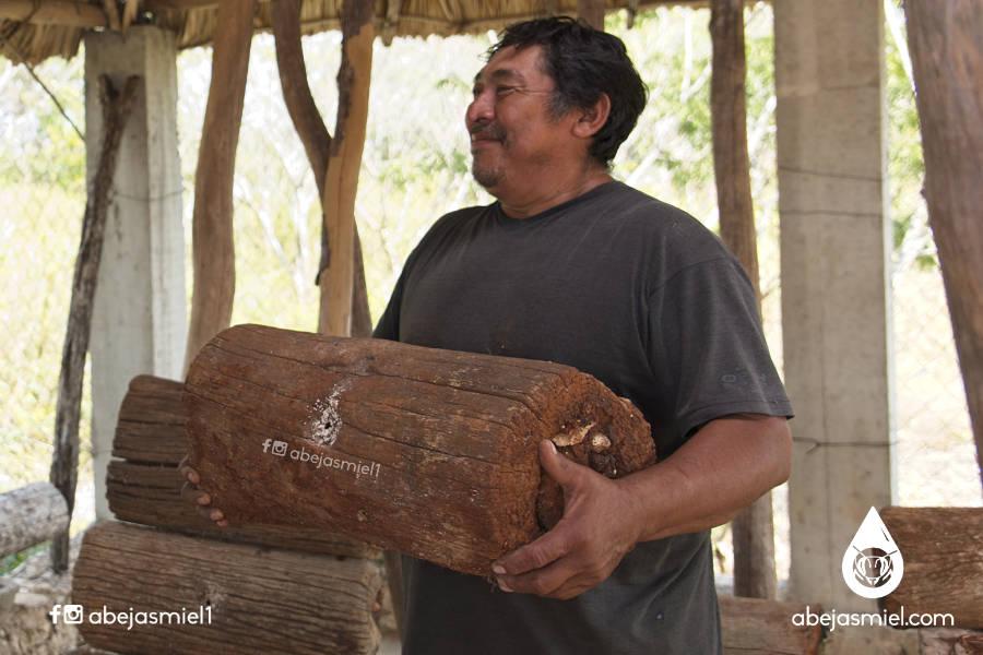 Abejas meliponas, el manejo tradicional ¿Qué son los jobones?
