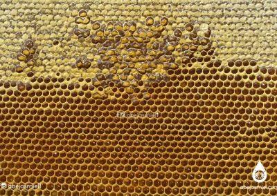 celdas de abejas